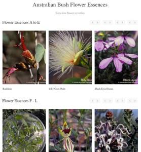 Australian Flower Essences Wordpressit Web development Loretta Faulkner